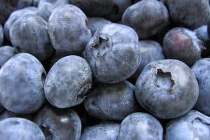 Organic Blueberries are relatively expensive, even though they are very nutritious, so if watching your budget you might consider alternative options and save berries such as blueberries as a treat or smaller part of your meals and deserts