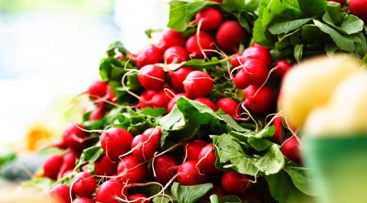 bunch of radishes - one of the great paleo diet snacks I love to make are paleo chips and salsa or guacamole using radish chips